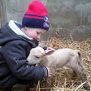 Feeding time for a baby lamb